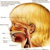 Аденоиды у детей – о симптомах, лечении