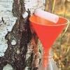 Березовый сок - рецепт консервирования