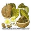 Бразильский орех. Полезные свойства, калорийность, противопоказания, состав