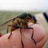 Чем опасны для здоровья укусы насекомых