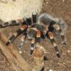 Что делать после укуса паука?