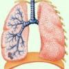 Диссеминированный туберкулез в организме человека