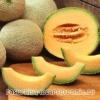 Дыня – калорийность, описание дыни, где растет, состав