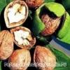 Грецкий орех: полезные свойства и противопоказания, приготовление лекарств