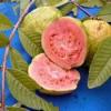 Гуава фрукт: полезные свойства, рецепты