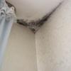 Как избавиться от плесени (обычной и черной) на стенах, на обоях?