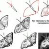 Как нарисовать бабочку? Простые советы для начинающих