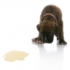 Как отучить собаку писать дома? Как отучить собаку метить дома?