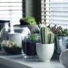 Как пересадить кактус в другой горшок в домашних условиях, чтобы не нанести вред растению?