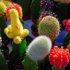 Как посадить кактус?