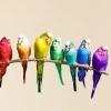Как приручить попугая к рукам? Советы для различных видов попугаев