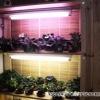 Какая лампа лучше для растений чтоб их выращивать круглый год?