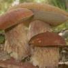 Какая польза от грибов?