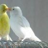 Каких птиц в дом лучше выбрать?