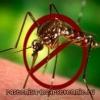 Какое эфирное масло от комаров?