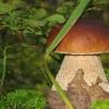 Калорийность грибов. Жареные и маринованные грибы: что калорийнее?