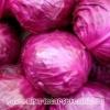Капуста краснокочанная: рецепты, польза, свойства, характеристика капусты
