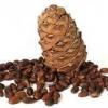 Кедровый орех - полезные свойства