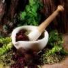 Киста печени: лечение народными средствами