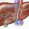 Клинические особенности алкогольного цирроза печени