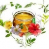 Лечение панкреатита лекарственными растениями