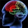 Лечение приступов эпилепсии лекарственными растениями