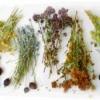 Лечение травами тиков, кашля, трахеита, пиелонефрита детей