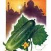 Лекарственное растение огурец посевной