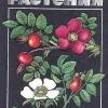 Лекарственные растения Беларуси