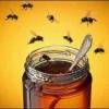 Мед каштановый, кипрейный, эспарцетовый полезные свойства