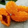 Момордика: выращивание из семян, особенности ухода в открытом грунте