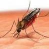 Народные методы лечения малярии