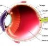 О офтальмологии