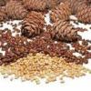 Орехи кедровые полезные свойства
