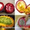 Овощи и фрукты экзотические летом