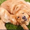 Перхоть у собаки: причины и лечение. У щенка перхоть: что делать?