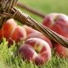 Персиковое масло: применение и свойства