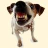 Первая помощь при укусе собаки
