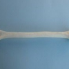 Плечевая кость