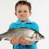 Почему рыбий жир полезен?