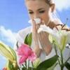 Показания и противопоказания к сезонной аллергии