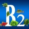 Польза витамина В2 для организма человека