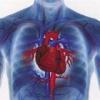 Причины и симптомы воспалительных заболеваний сердца