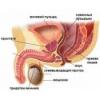 Простата. Лечение народными средствами, травами