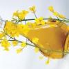 Рапсовое масло: вред и польза. Рапсовое масло как топливо: применение