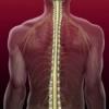 Сдавление спинного мозга: симптомы, причины, лечение