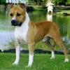 Средние собаки: породы и их описание, названия и фото