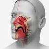 Вазомоторный ринит или воспаление слизистой оболочки носа