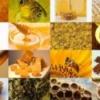 Виды меда, мед и продукты пчеловодства