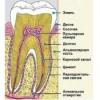 Восстанавливается ли зубная эмаль?